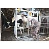 Услуги по обработке копыт крупного рогатого скота (КРС)